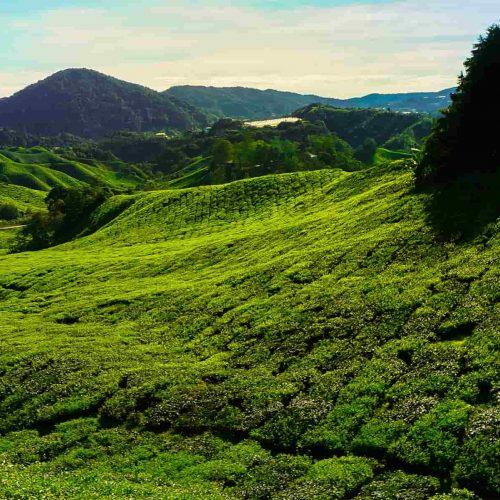 Circuit Jungles et Nature de Malaisie