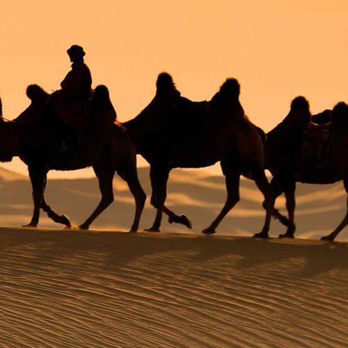 Séjours en famille nomade