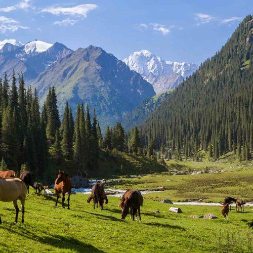 Trek Kirghizstan aux monts célèstes & lac Issyk-Koul