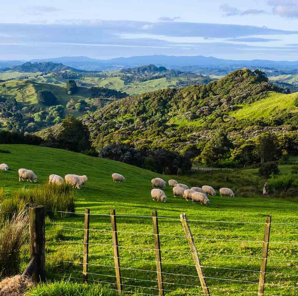 Autotour Nouvelle Zélande île du Nord