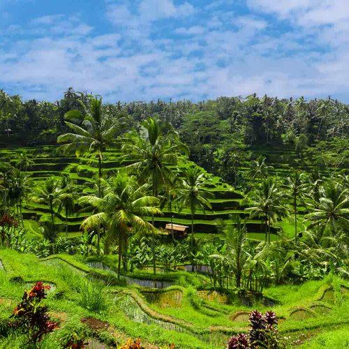 Voyage de Bali à Java