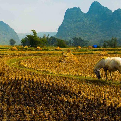 Traversée du Vietnam classique