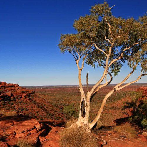 Les classiques d'Australie