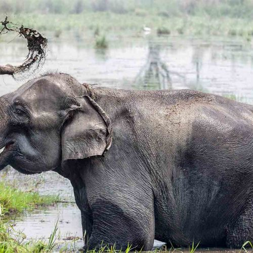 Safari au Chitwan