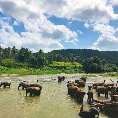 Voyage au Sri Lanka en Famille