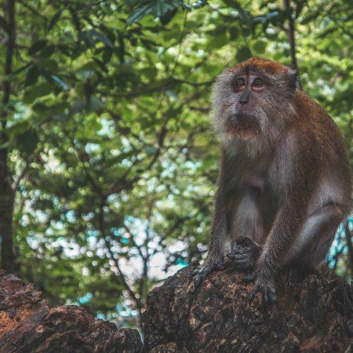 Découverte de la nature – Sabah
