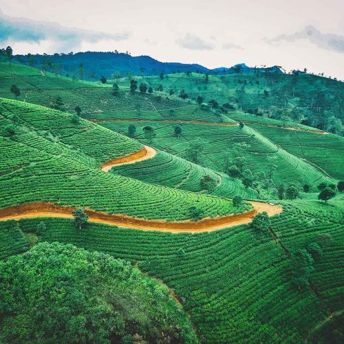 Trekking au Sri Lanka – Sur la route du thé